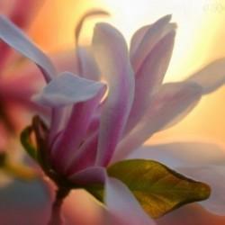 Парфюм Delicate Magnolia