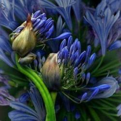 Парфюм  Velvet Hyacinth